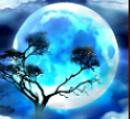 Scatter vom Online-Spielautomat Savanna Moon