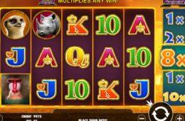 Ein Bild des gratis Online-Automatenspiels Hot Safari