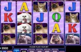 Kép a 100 Cats pénzbefizetés nélküli ingyenes casino nyerőgépes játékból