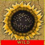 A Desert Kingdom ingyenes kaszinó játék vad ikonja