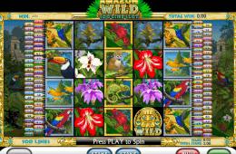 Darmowa gra kasynowa Amazon Wild online