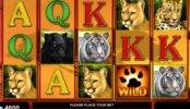 Maszyna bez depozytu Cats Royal online
