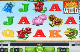 Poza jocului cu aparate gratuit online Flowers
