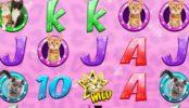 Imagine din jocul de păcănele online gratis Meow Money
