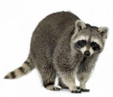 The Exterminator - raton