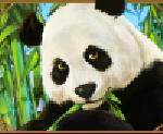 Lucky Panda free slot - scatter