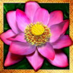 Special symbol from slot machine Thai Flower online