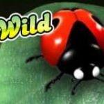 Wild symbol from online free slot Wild Berry