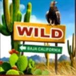 Comodín del juego de casino gratis Route of Mexico