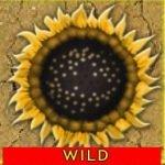 Wild symbol of Desert Kingdom casino free game